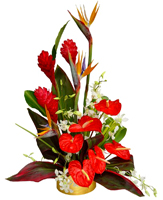 GREAT AND UNIQUE TROPICAL FLOWERS - FREE DELIVERY FOR ORDERS ONLINE JUST FOR MOTHER'S DAY!!!!!!! ENJOY IT - ORDER NOW !!!!